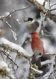 Naturally Avian Guided Birding Trips