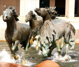 The Mustangs of Las Colinas, February 2008