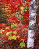 new_england_fall_color