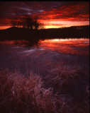 Glacial Park sunrise, McHenry Co., IL