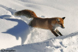 Inverno nel Gran Paradiso-Winter in Gran Paradiso