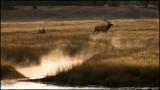 WM---2008-09-18--0975--Yellowstone---Alain-Trinckvel.jpg