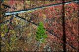 WM---2008-09-18--1585--Yellowstone---Alain-Trinckvel-4.jpg