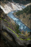 WM---2008-09-18--1853--Yellowstone---Alain-Trinckvel-3.jpg