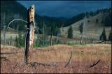 WM---2008-09-18--1680--Yellowstone---Alain-Trinckvel-3.jpg