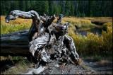 WM---2008-09-18--2052--Yellowstone---Alain-Trinckvel-3.jpg