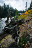 WM---2008-09-18--1980--Yellowstone---Alain-Trinckvel.jpg