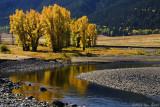 Fall Along the Lamar River 09_28_08.jpg