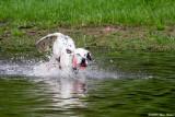 Timbers First Swim  05_29_09.jpg