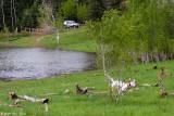 Timber On A Run 05_29_09.jpg