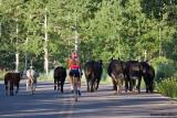 Wanda and the Cattle Drive 07_22_09.jpg
