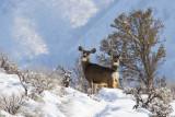 Deer 1_9_2011.jpg
