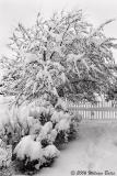 Winter In The Garden 01_19_06.jpg