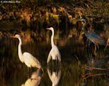 Deep In the Swamp 02_27_06.jpg