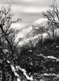 Winter's Grip 03_09_06.jpg