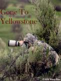 Gone To and Lost In Yellowstone
