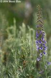 Flower and Pine.jpg