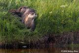 Otters 3 07_08_06.jpg