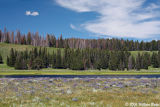 A Summers Day in Yellowstone.jpg