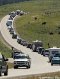 Getting Away From the Rat Race in Yellowstone 07_08_06.jpg
