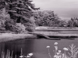 Local Infrared