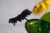 Sunflower Shadow