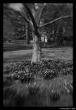 Entally Tree