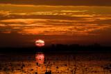 Lacassine NWR Sunrise