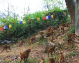 2010.11.26 Nepal #3 203.JPG