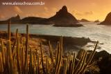 Praia do Sueste, Fernando de Noronha, Pernambuco 8968 090916-2.jpg