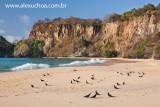 Praia do Sancho, Fernando de Noronha, Pernambuco 9182 090916.jpg