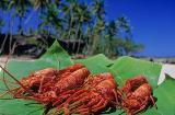 Lagostas do Seu Guido na praia da Cueira, Ilha de Boipeba