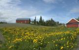 Heimdal - Landscapes west of Trondheim