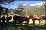 Horses waiting to be assigned to new riders.