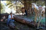 The cowboy (Mervyn) and his horses