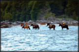Crossing the Azul - the horses are heading home for the night.