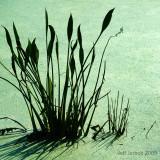 green-004.jpg