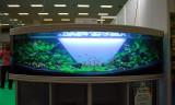 Fisch & Reptil 2008 (Germany - Sindelfingen)