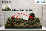 NatureSoil Step by Step Layout Nr.3 by Oliver Knott - Step 12