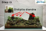 NatureSoil Step by Step Layout Nr.3 by Oliver Knott - Step 13