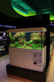 360 Liter - new aquascape by Oliver Knott -