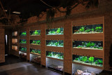Aquarium Shop's - Decoration and Presentation -