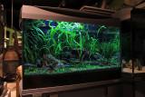 60 Liter Easy Shrimp Tank by Oliver Knott