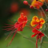 orange flowers & butterflies