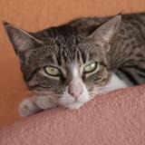 Gail's Cat