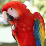 Managua Zoo