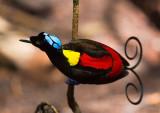 Bird Archive