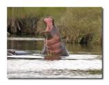 Hippo Breach