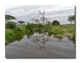 Serengeti Reflection