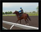 Riders & Horses